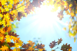 What Air Quality Concerns Should You Know This Fall?