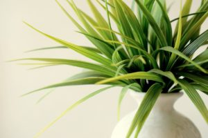 Indoor Plants and IAQ: Finding a Balance