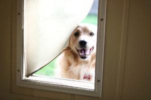 Achieving Efficiency: How Pet Doors Affect Your Bills