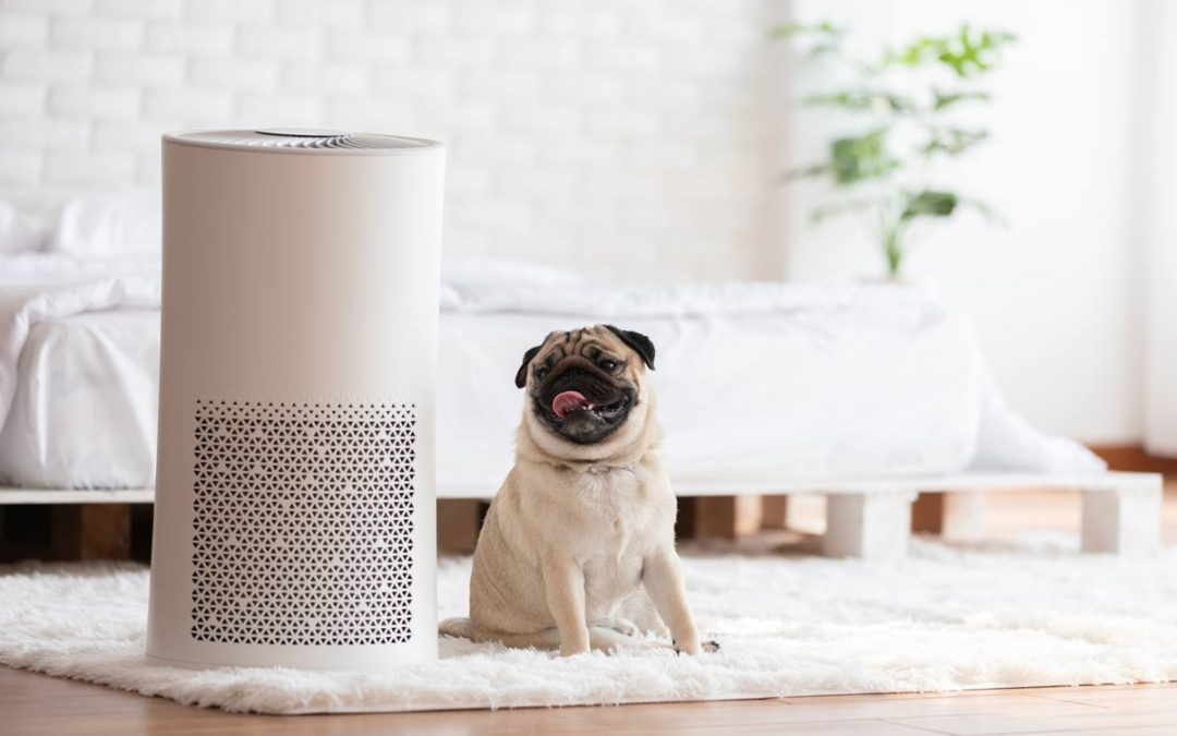 Get Up to Speed on Air Purifier Science